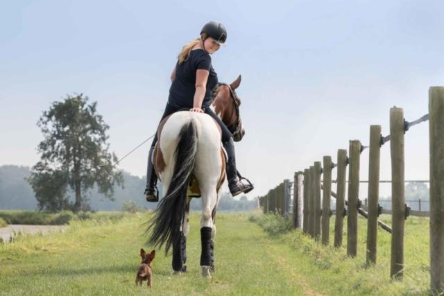 Marleen Verheul Fotografie, paardenfotografie, dierenfotograaf, dierenfotografie, paard ruiter en klein hondje
