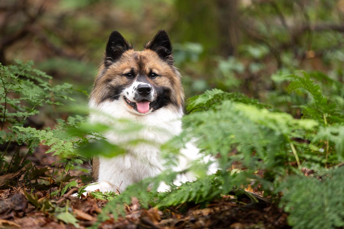 Marleen Verheul Fotografie-hondenfotografie-Chebo