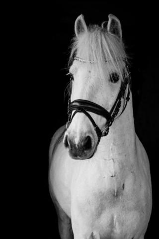 Marleen Verheul Fotografie-paardenfotografie-blackphoto-blackfoto