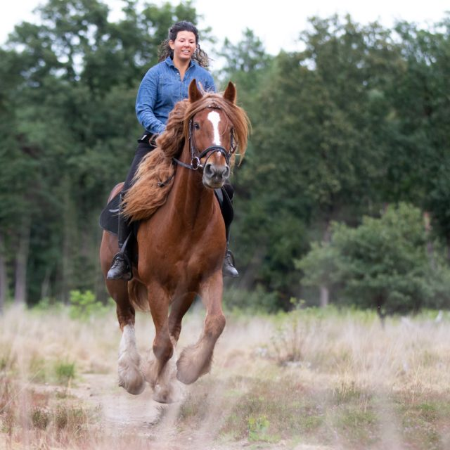 Paardenfotografie, paard galopperend in het bos