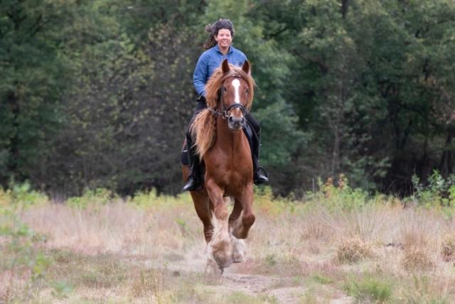 Marleen Verheul Fotografie, dierenfotografie, paardenfotografie, dierenfotograaf, bruin paard met ruiter galopperend in het bos