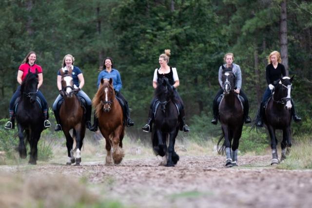 Marleen Verheul Fotografie, dierenfotografie, paardenfotografie, dierenfotograaf, 6 paarden met ruiters op een rij in het bos