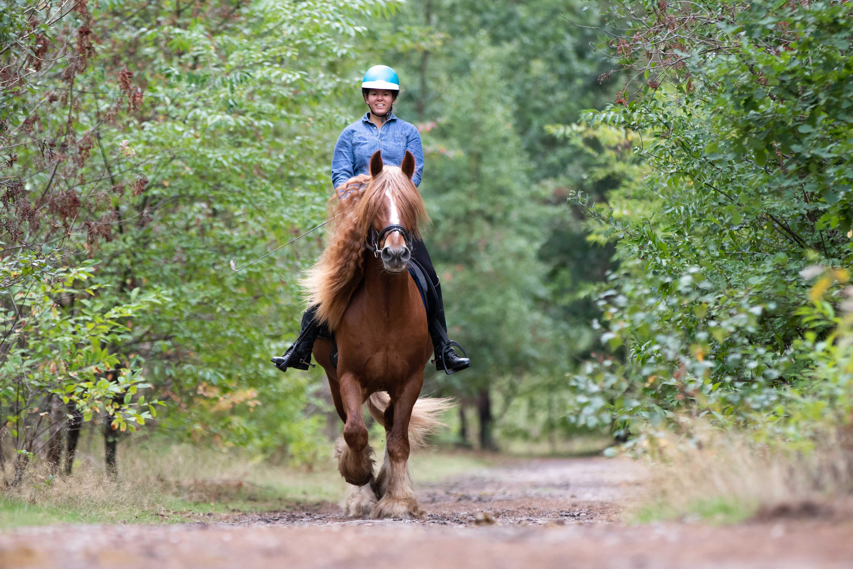 Marleen Verheul Fotografie, dierenfotografie, dierenfotograaf, paardenfotografie, Paard en ruiter in het bos