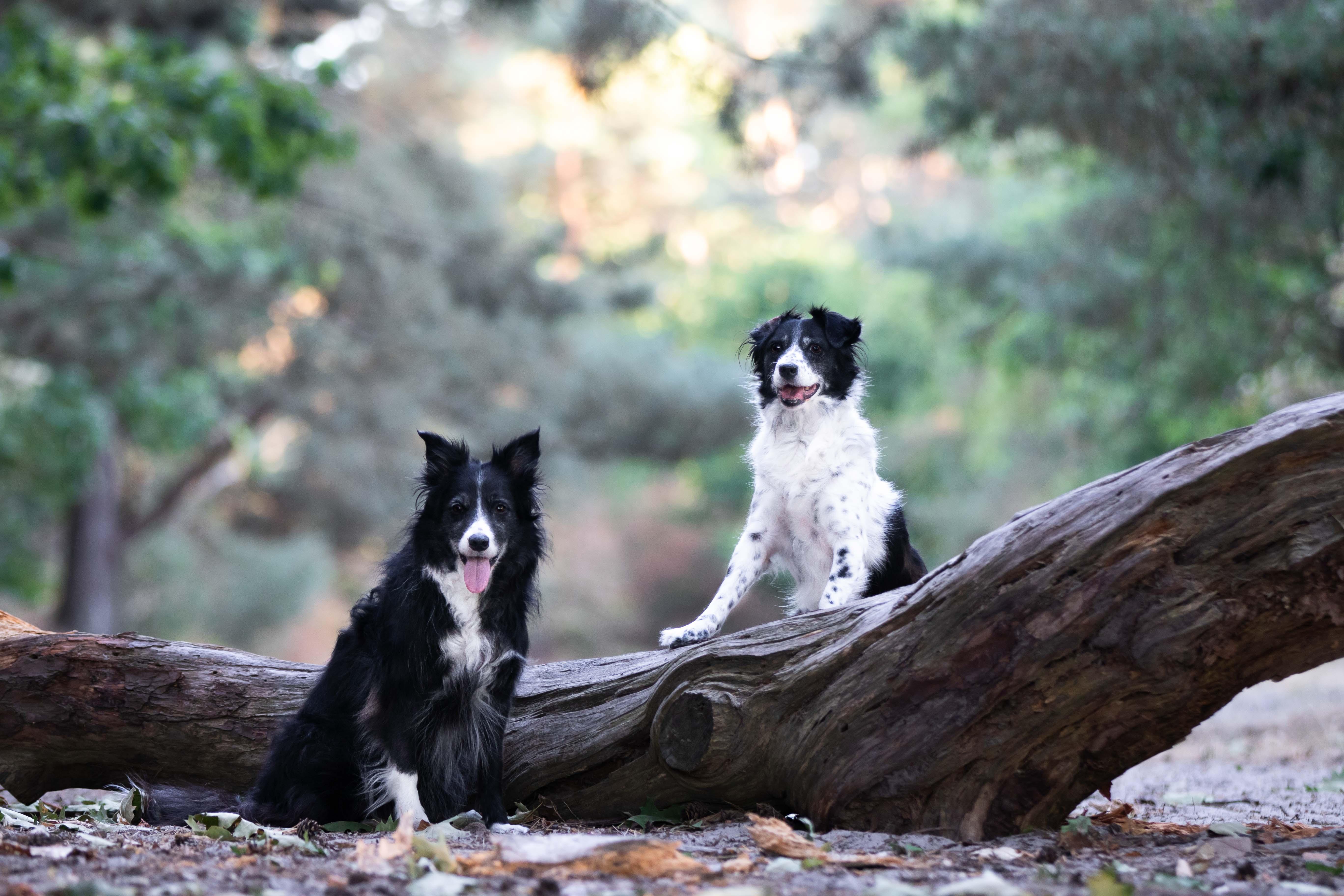 Marleen Verheul Fotografie, hondenfotografie