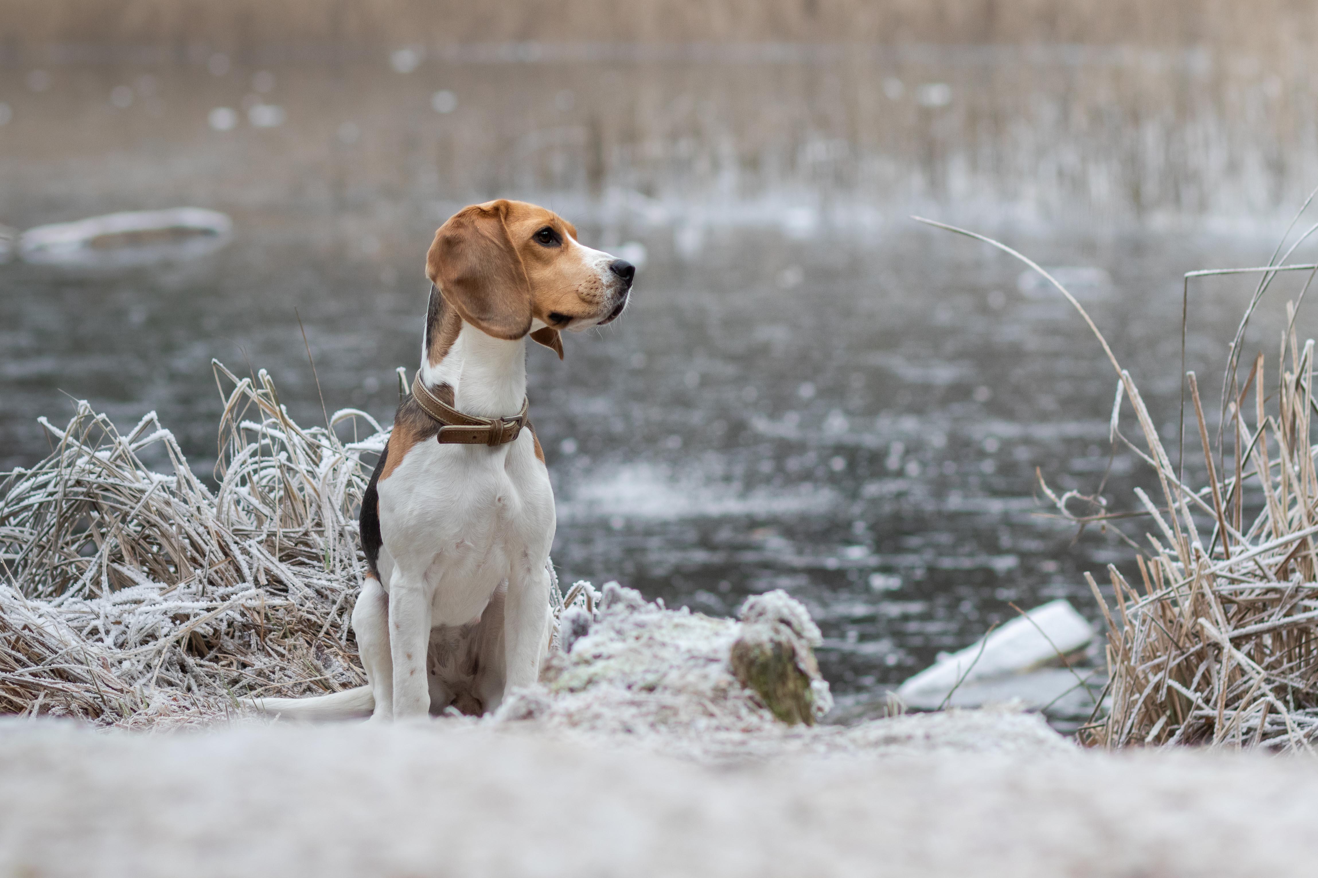 Marleen Verheul Fotografie, Sunfield Academy, hondenfotografie