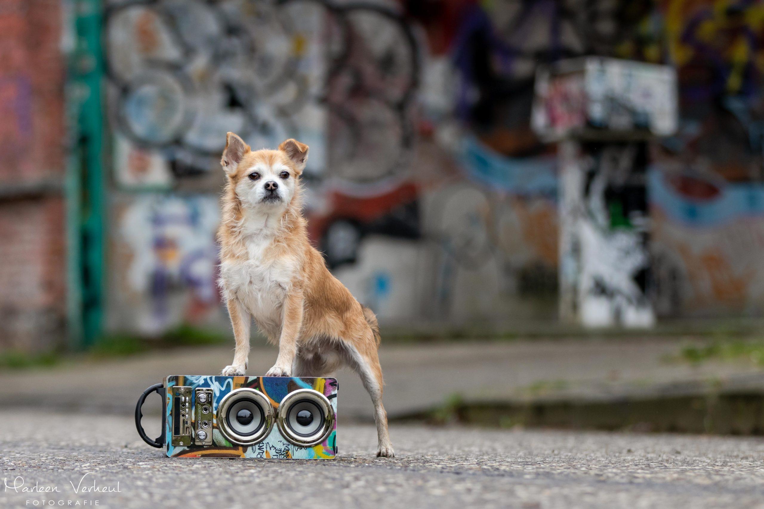 Marleen Verheul Fotografie, hondenfotografie, hondenfotograaf, hondenportret in Doel (België)