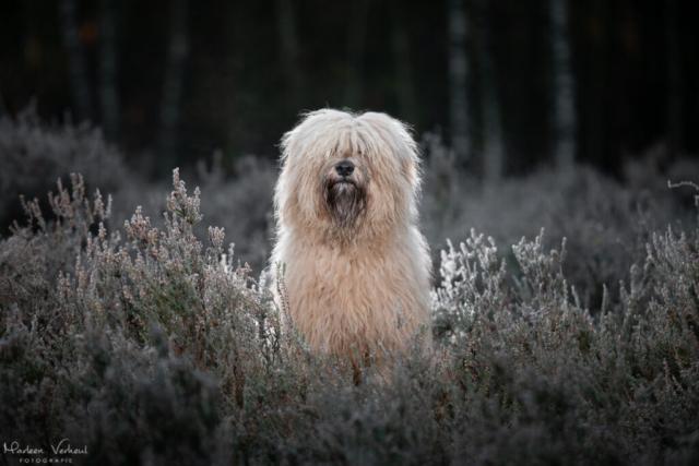 Marleen Verheul Fotografie, hondenfotografie, hondenfotograaf, Strobist fotografie