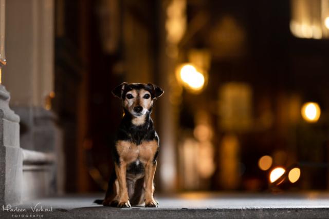 Marleen Verheul Fotografie, hondenfotografie, hondenfotograaf, hondenportret, strobist fotografie, hond in de stad