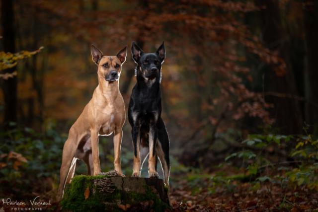 Marleen Verheul Fotografie, hondenfotografie, hondenfotograaf, hondenportret, strobist fotografie, honden in het bos