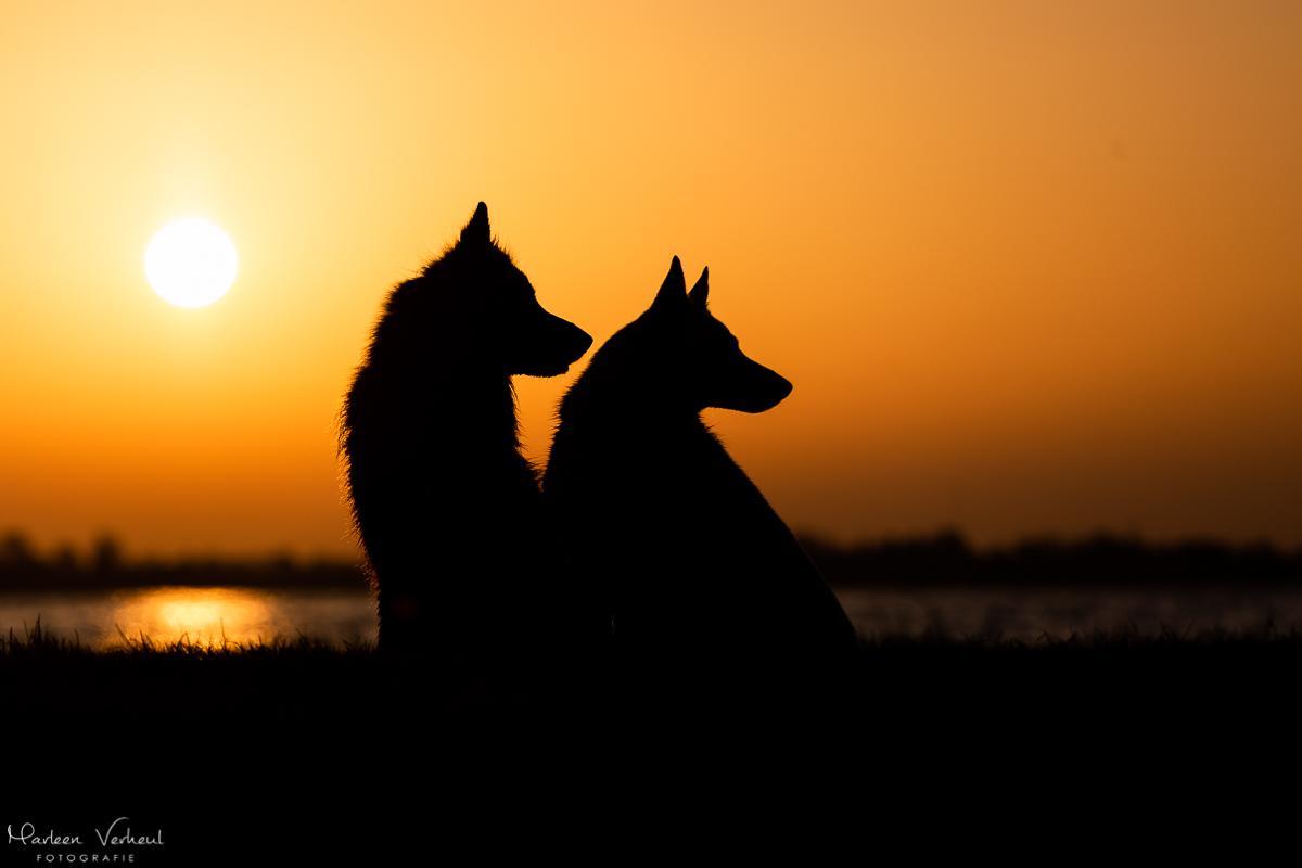 Marleen Verheul Fotografie, hondenfotografie, hondenfotograaf, silhouet van 2 herders