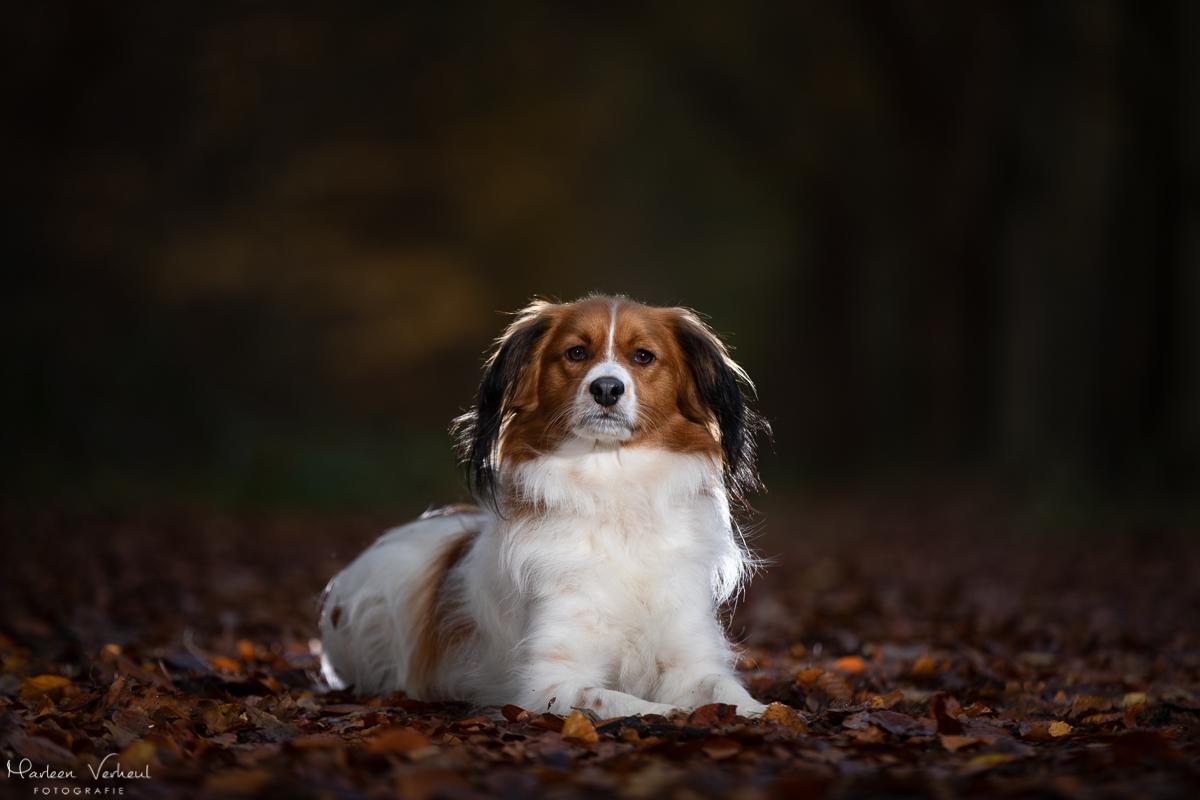 Marleen Verheul Fotografie, hondenfotografie, hondenfotograaf, Strobist fotografie, Kooiker hond