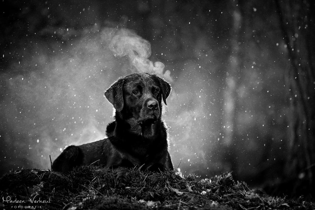 Marleen Verheul Fotografie, hondenfotografie, hondenfotograaf, hondenportret, strobist fotografie, labrador in het bos, zwart/wit