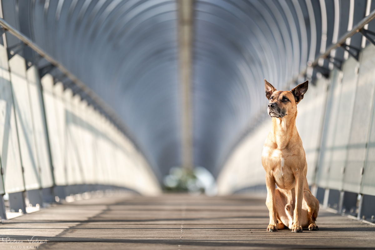 Marleen Verheul Fotografie, hondenfotografie, hondenfotograaf